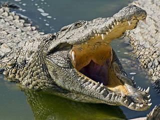La ferme aux crocodiles © Park Djerba Explore