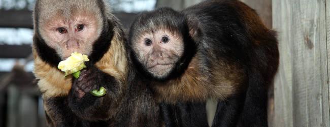 Affen © Zoo Magdeburg
