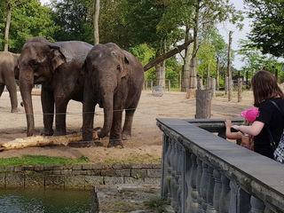 Der perfekte Zoo