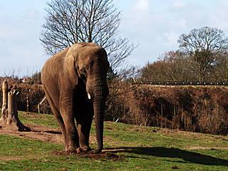 Elefant im Safaripark © no1danny