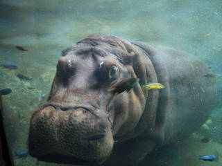 Der San Antonio Zoo and Aquarium in San Antonio, Texas © txbookreader