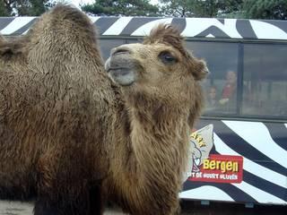 Der Safaripark Beekse Bergen in Belgien