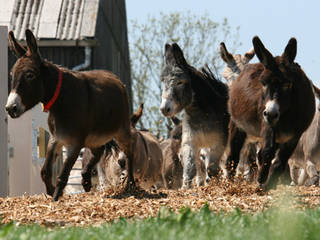 The Donkey Sanctuary © The Donkey Sanctuary