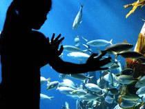 Die faszinierende Unterwasser-Welt © Sea Life München