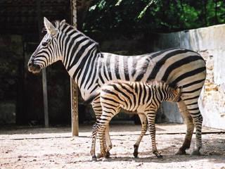 Odessa Zoo  © Odessa Zoo